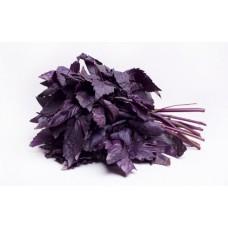 Базилик  фиолетовый ( Райхон)